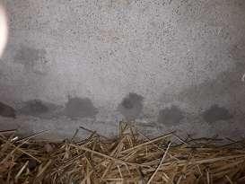 Traitement de l'humidité Mer MURPROTEC BLOIS Julien